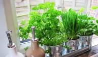 Świeże zioła w kuchni